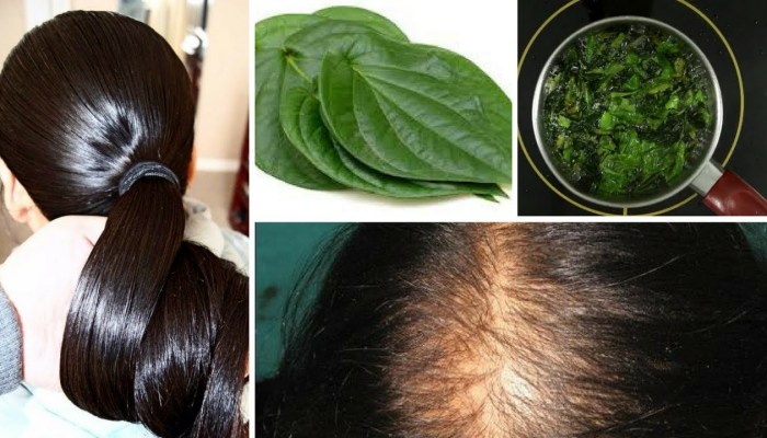 Grow Thick Hair Naturally with Betel Leaves(Paan ka Patta)