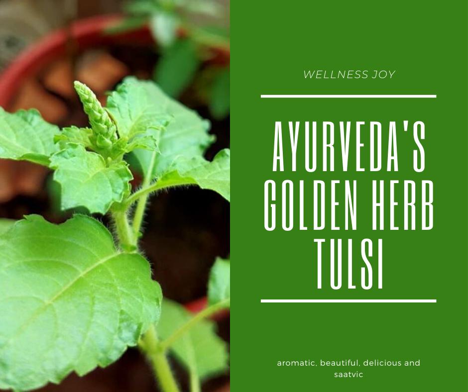 Ayurveda's Golden Herb Tulsi