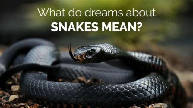 Dreams About Snakes