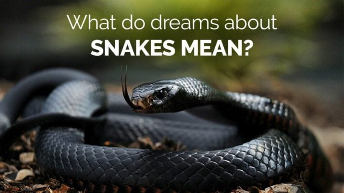 Snakes in your Dream|Meaning and Symbolism