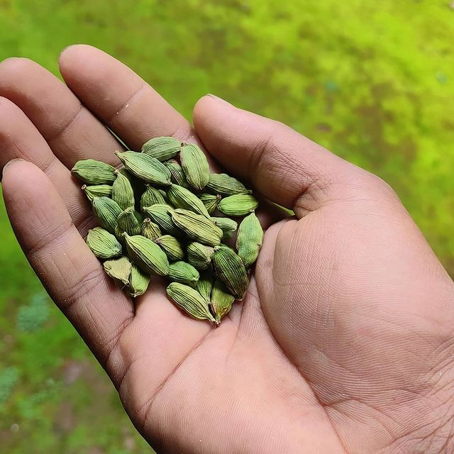 Cardamom Supports Digestive Health. Buy Green Cardamom Origin from Kerala.
