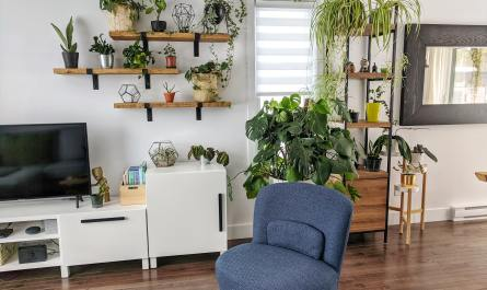 Mood Boosting Houseplants for Indoors