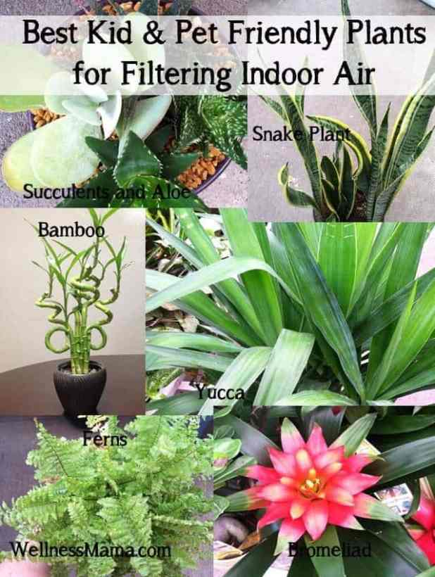 Best kid and pet friendly houseplants for filtering indoor air
