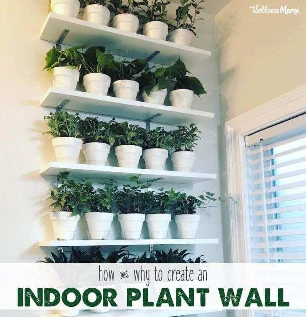 how to hang plants on wall inside