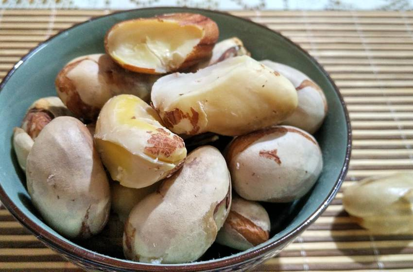How to preserve Jackfruit Seeds?