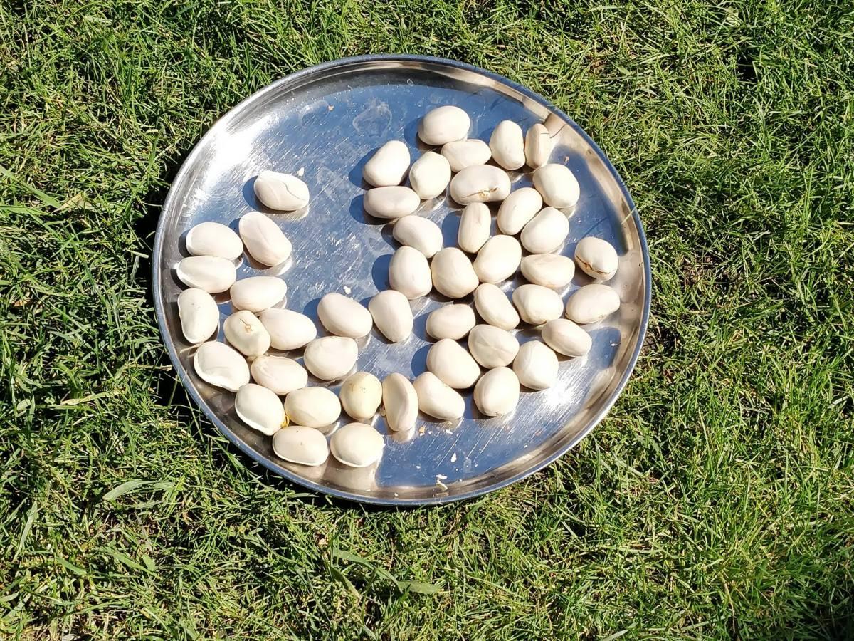 How to preserve jackfruit seeds? sundry
