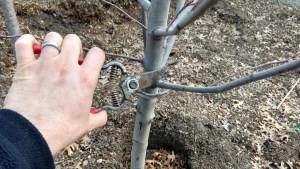 Prune trees topeka emporia