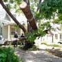 Damaged pecan tree