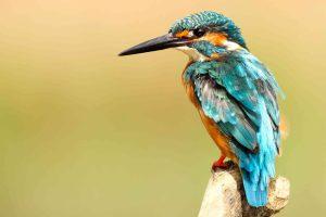 Birds that make beats