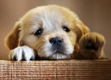 sad puppy.png