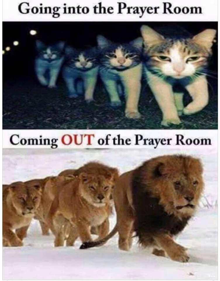walk like lions