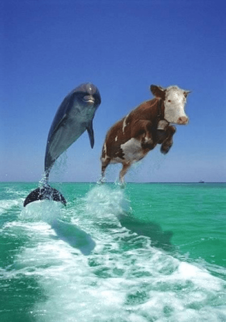 COW DOLPHIN Rapid Stress Test