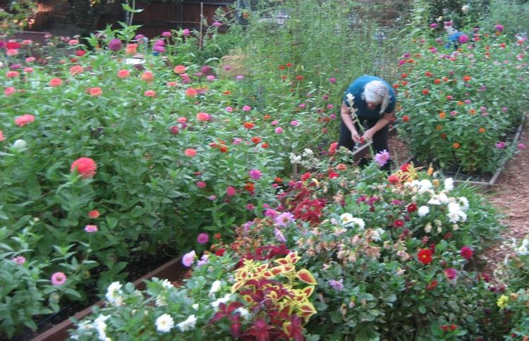 Nelda working in her Northern California garden, JHD