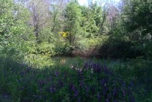 Stream in a meadow