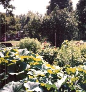 Garden at Elat Chayyim, 1997, JHD