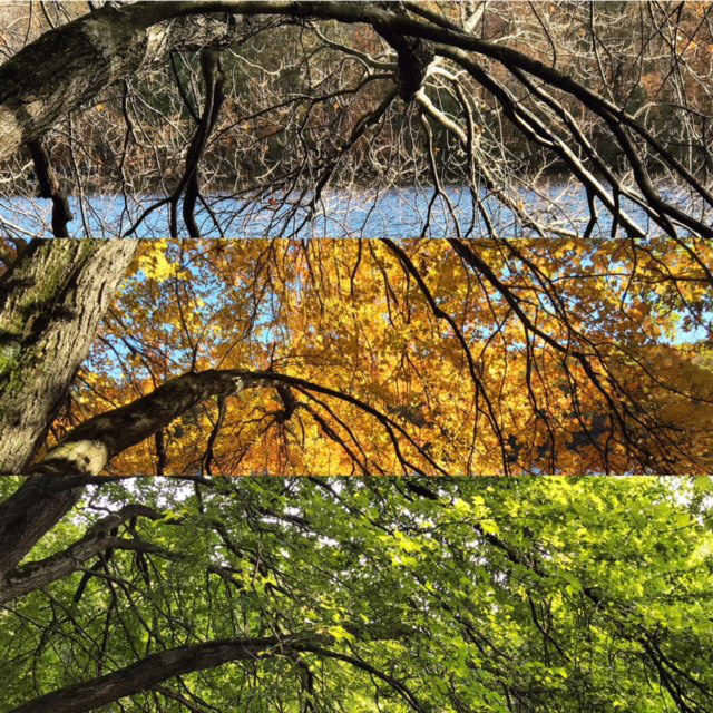Tree Through Seasons, Rockefeller State Park Preserve, JHD