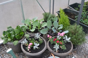 greenhouse container gardening