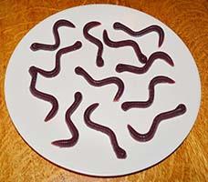 Fruit Gummy Worms