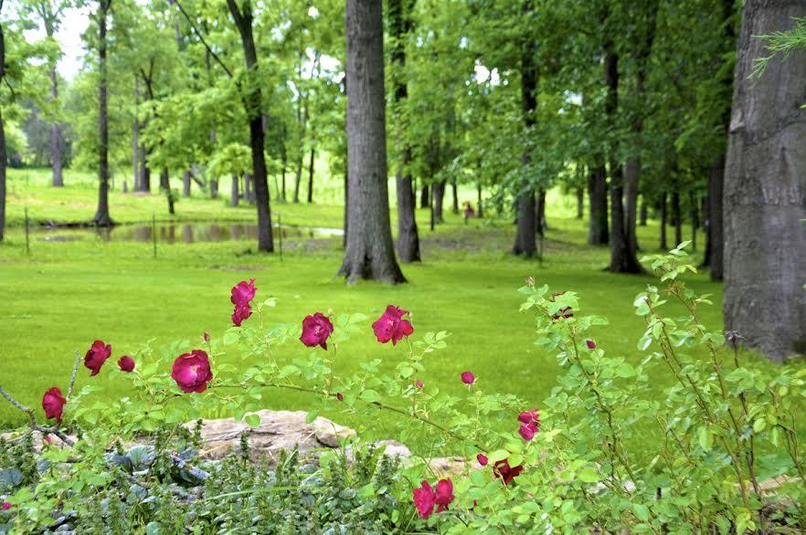 rosesblurredtrees
