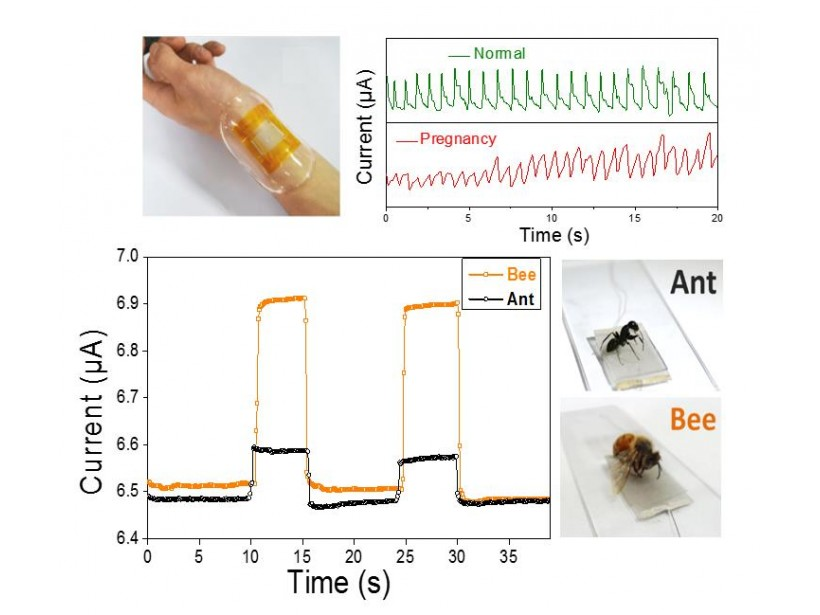 Researchers Create New Bionic Sensor Film