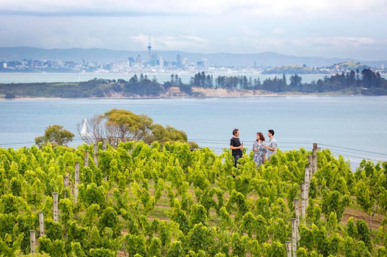 Waiheke Island vineyard view back to Auckland city. Image credit: Miles Holden.