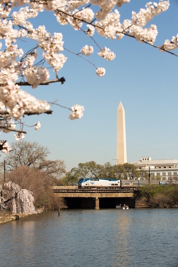 Cherry Blossoms bloom in Washington D.C. as an Amtrak train begins its journey over the Potomic River. Image courtesy Rail Plus.