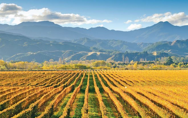 Marlborough wine region - Image Scenic