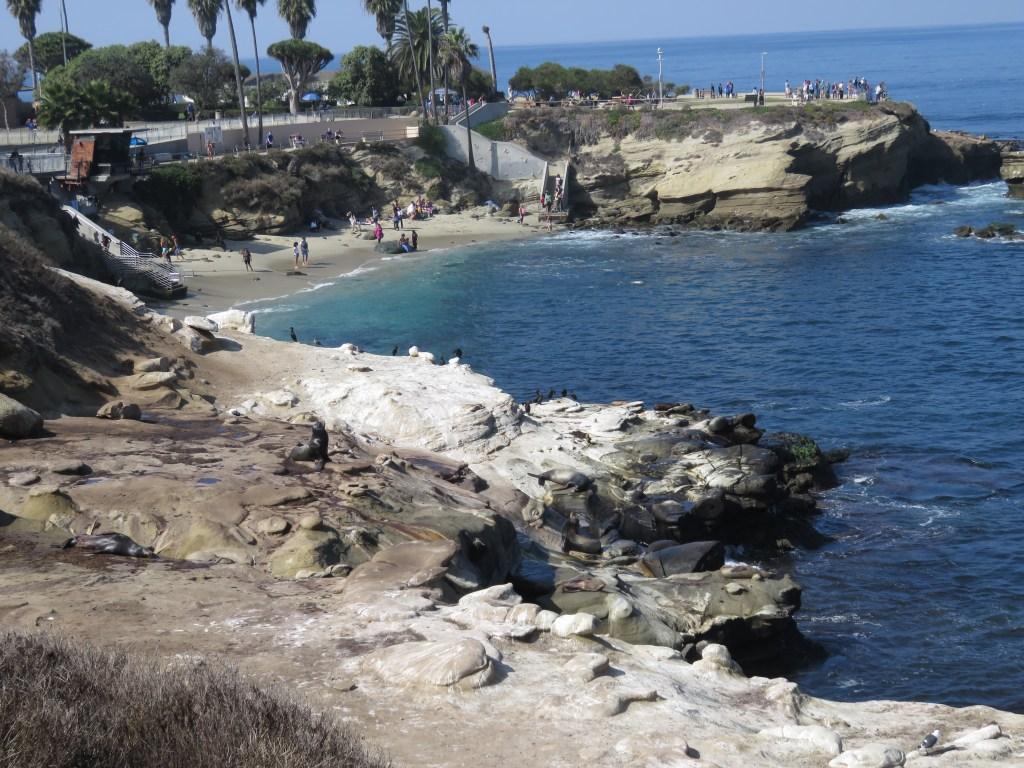 First glimpse of the La Jolla Cove sea lions