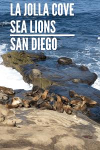 La Jolla Cove Sea Lions in San Diego