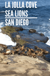La Jolla Cove Sea Lions in San Diego
