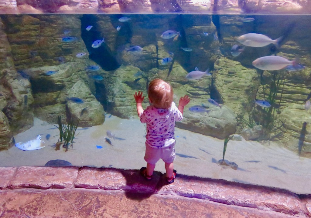 Things to do in Bugibba with kids - National Aquarium