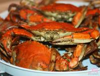 All-you-can-eat Steamed Crabs at the River Shack in Charlestown, Maryland
