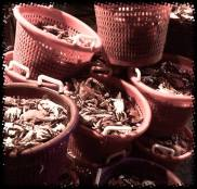 steamed bushels of crabs Charlestown MD