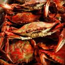 Steamed Crabs in Maryland