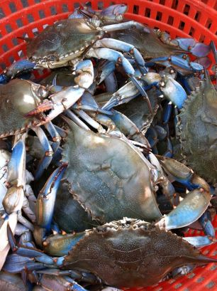Steamed Crabs at The Wellwood Restaurant Maryland