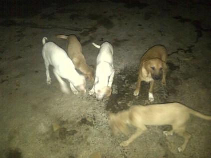 Cachorros de Combi