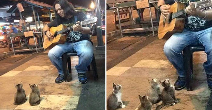 Image result for This Street Musician Was About To Call It Quits… But Then These Kittens Showed Up And Did This.