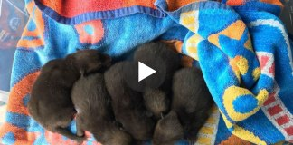 Man Finds 5 Abandoned 'Puppies' In His Garden – Then Quickly Realizes He Made A Big Mistake