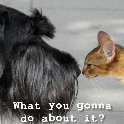 Dog_Cat what