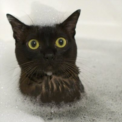another bath cat
