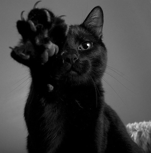 black-cat-w-claws