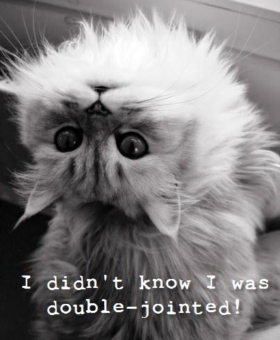 head backwards cat