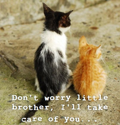 kitten take care of little brother