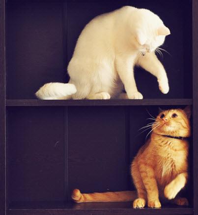 kittens in bookcase