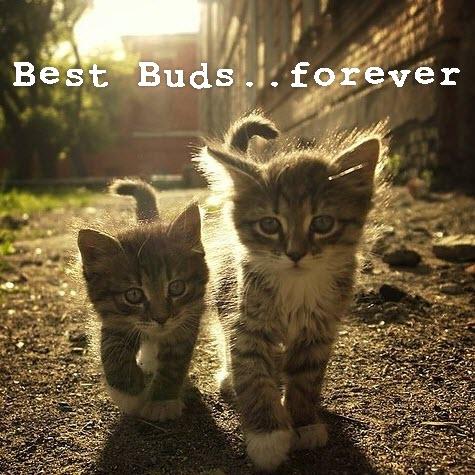 two kittens walking in sun