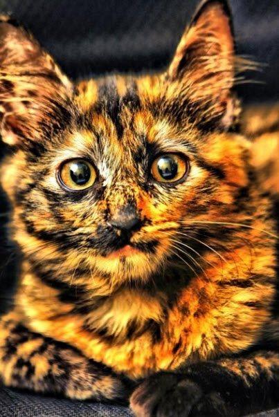 unusual colour cat