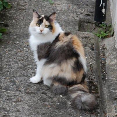 very pretty kitty