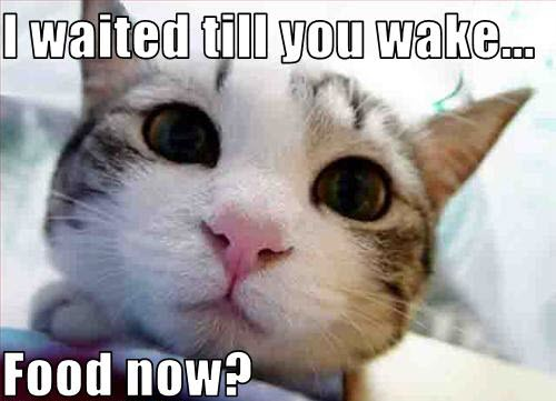 awake now food