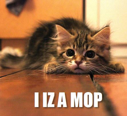 cat as mop