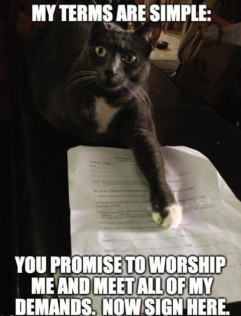 cat demands